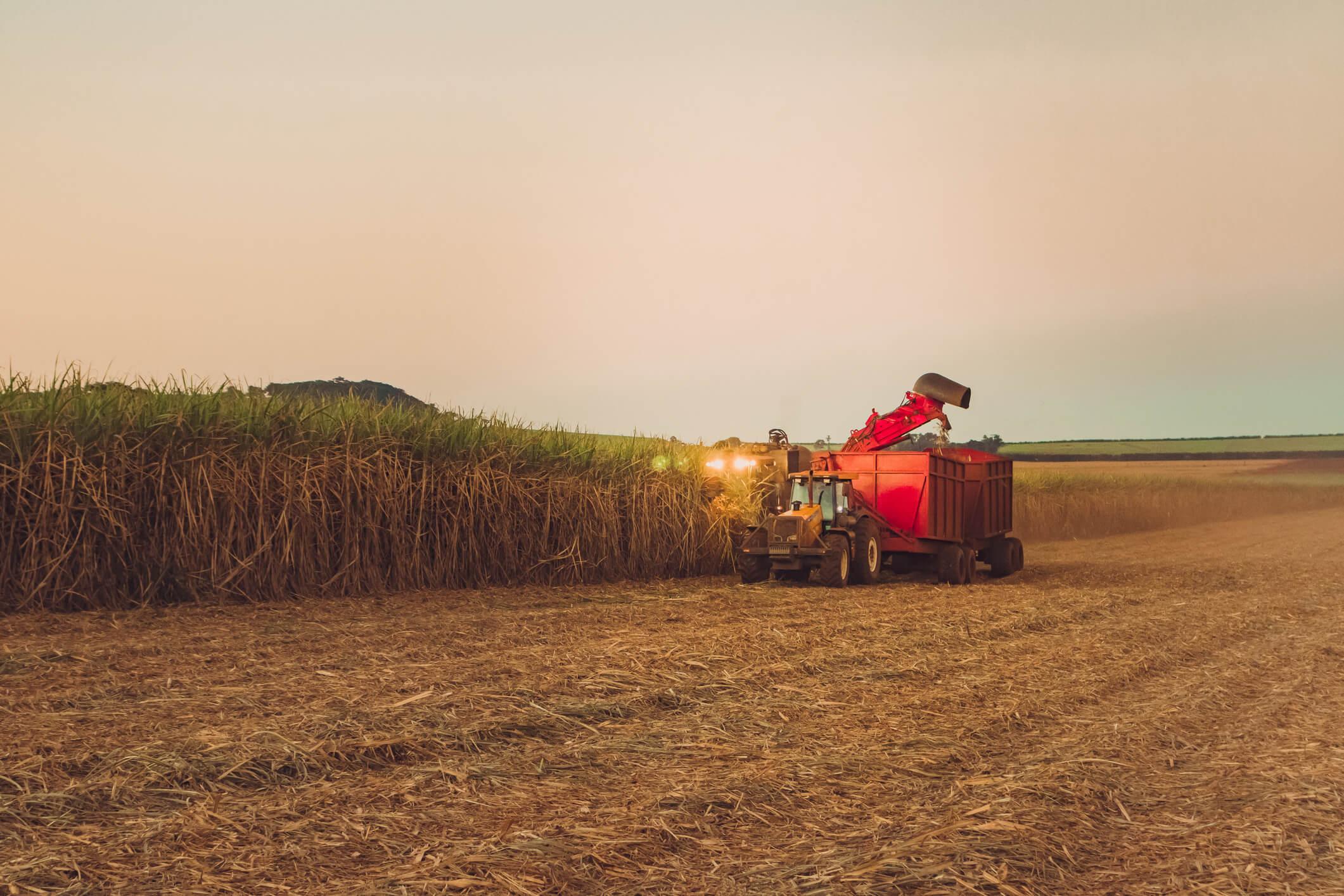 colheita de cana mecanizada