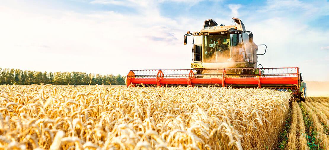 Colheitadeira de grãos