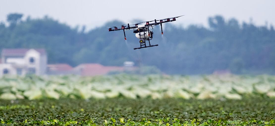 Agricultura sustentável: o que é e quais os desafios dessa modalidade